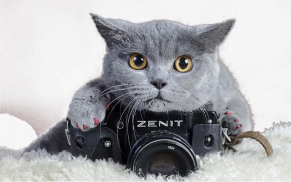 Бизнес для тех, кто ладит с фототехникой
